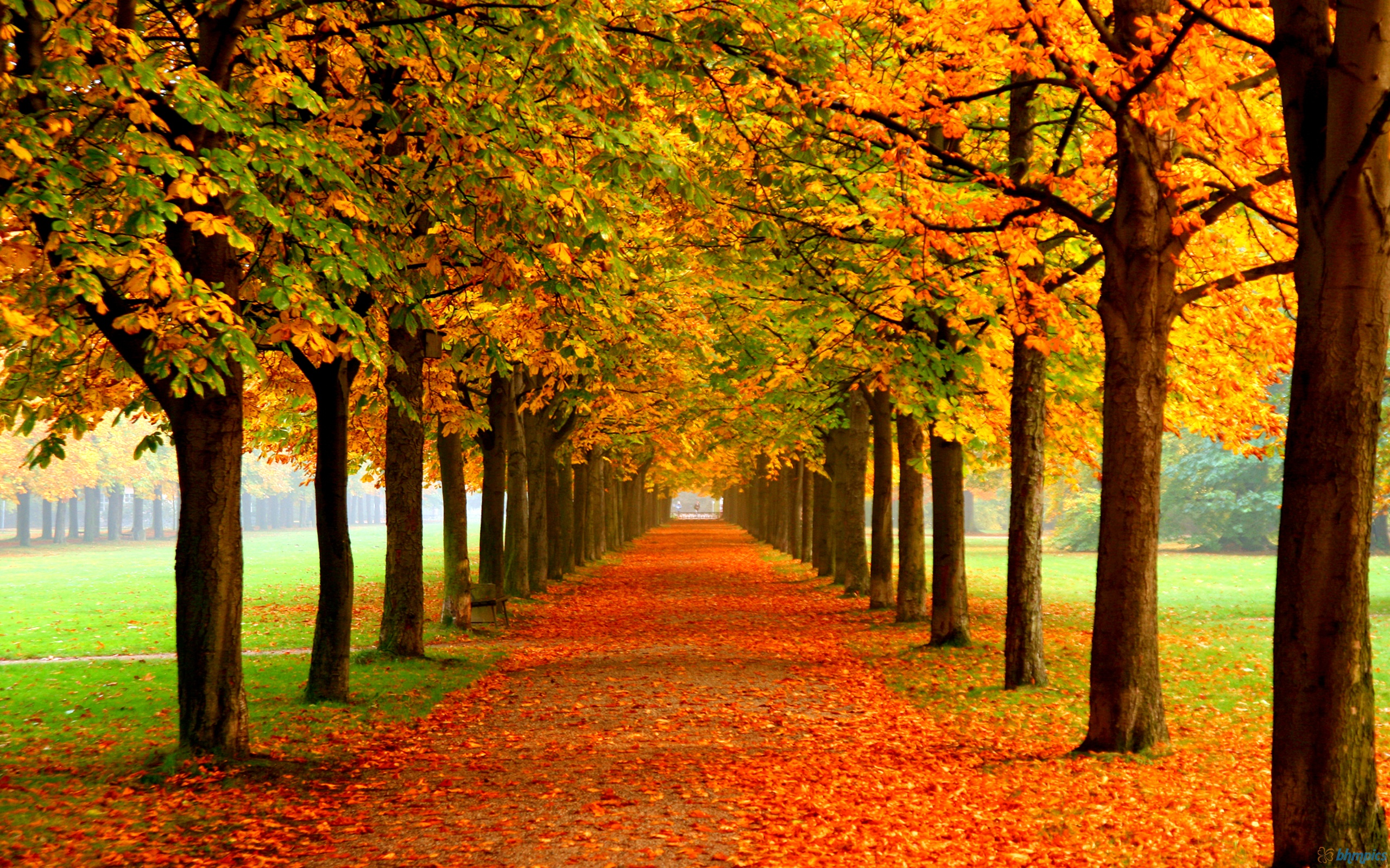 Image result for fall leaves